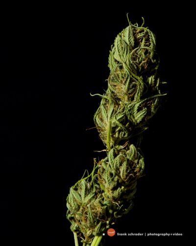 Product / Commercial Photography -- Medical and recreational Marijuana